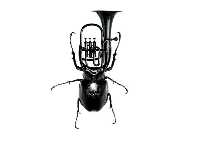 музыки жуки