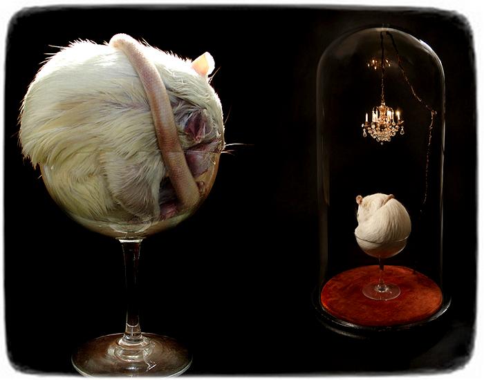 Необычные скульптуры из животных и птиц. Таксидермия от Полли Морган (Polly Morgan)