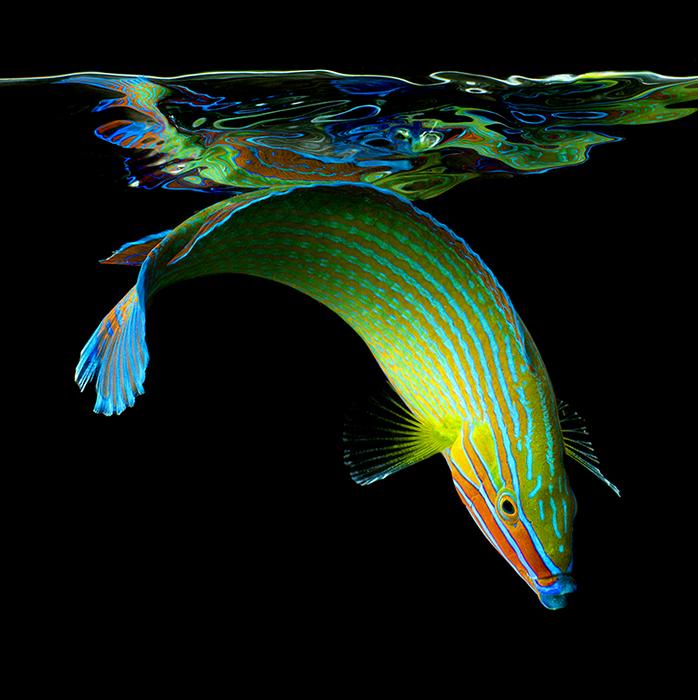 Красочные подводные жители на фото Марка Лаита (Mark Laita)