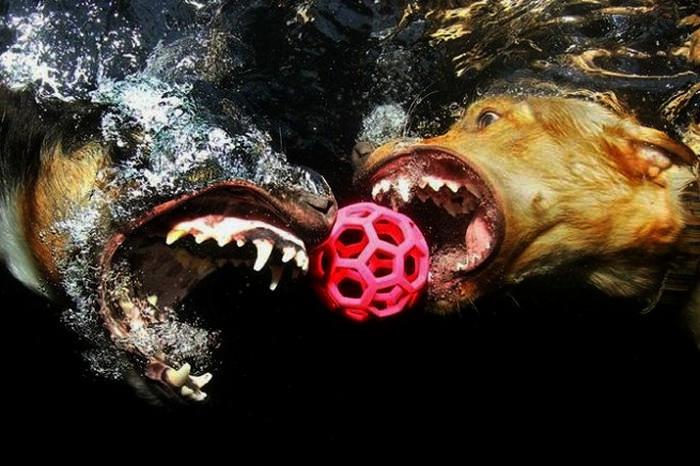 Серия этих удивительных фотографий собак, ловящих мячик под водой