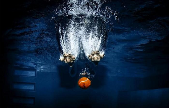 Underwater Dogs. Скоростное подводное фото от Seth Casteel