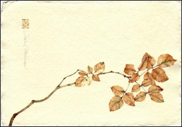 Китайские акварели итальянской художницы Сильвии Молинари (Silvia Molinari)