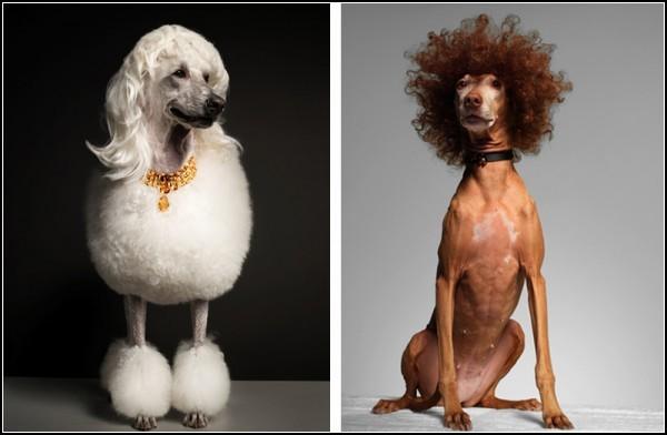 ������-������ � ������� Bourgeois Dog