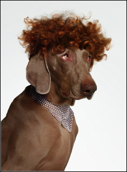 Собаки-модели в проекте Bourgeois Dog