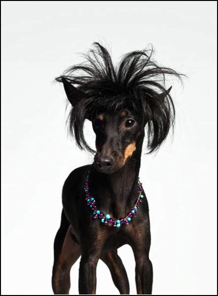 Проект Bourgeois Dog от Торкила Гуднансона (Torkil Gudnanson)