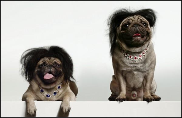 Собаки с большим модельным будущим