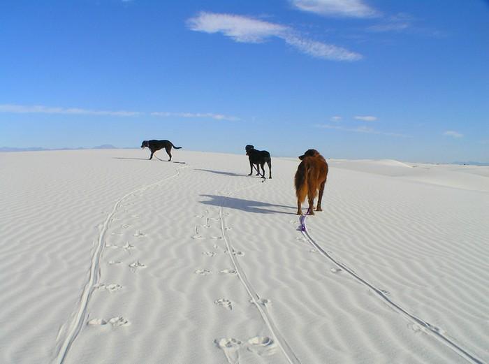 Белые пески в Нью-Мексико. Место, где всегда «зима»