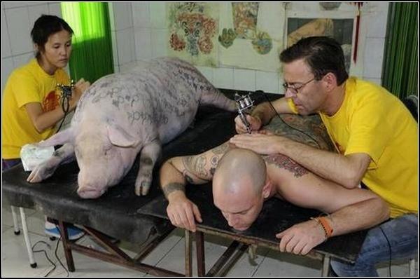 Вим Дельвой и компания тщательно выбирают рисунок для каждой свинки