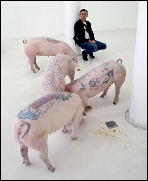 Вим Дельвой почти 5 лет делает татуировки своим питомцам