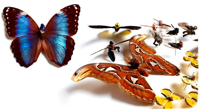 Арт-проект Pests. Насекомые-гибриды от Эми Шварц (Amy Swartz)