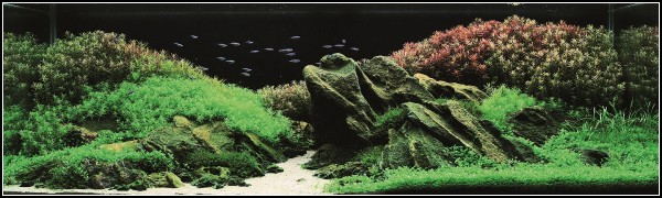 Аквариум вьетнамского акваскейпера