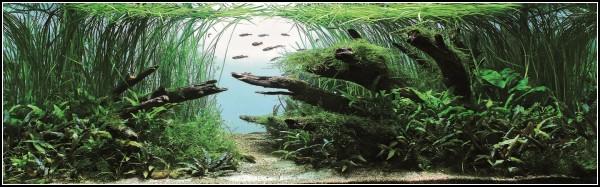 *Бронзовый* аквариумный дизайн от Григория Полищука