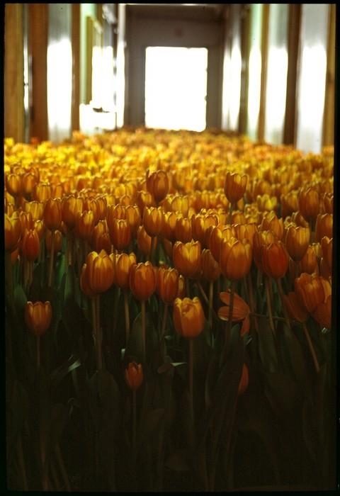 Bloom: 28000 цветов для Массачусетского Центра психологического здоровья