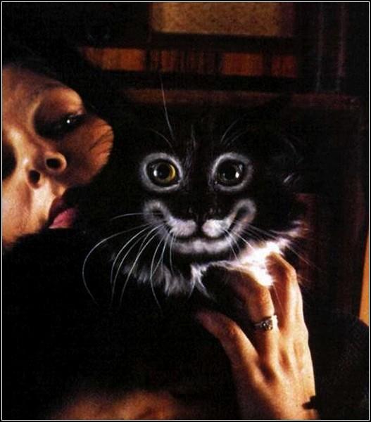 Бодиарт на кошачьем тельце