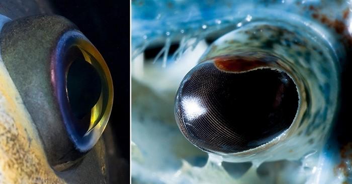Глаза рыбы и голубого краба