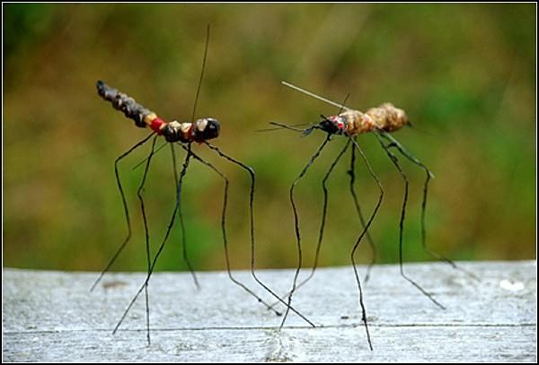 Букашки из серии Insects