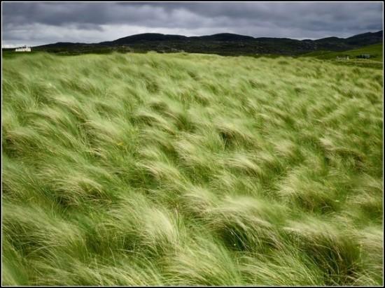 Beach Grass, Scotland