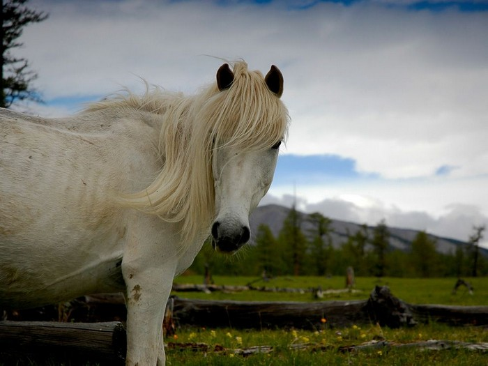 Wild Horse, Mongolia
