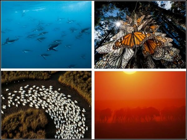 Лучшие фотографии за 01-07 ноября от National Geographic
