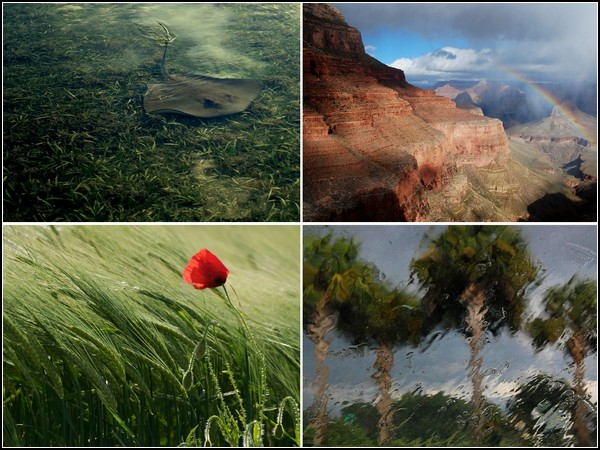 Лучшие фотографии за 04 - 10 апреля от National Geographic