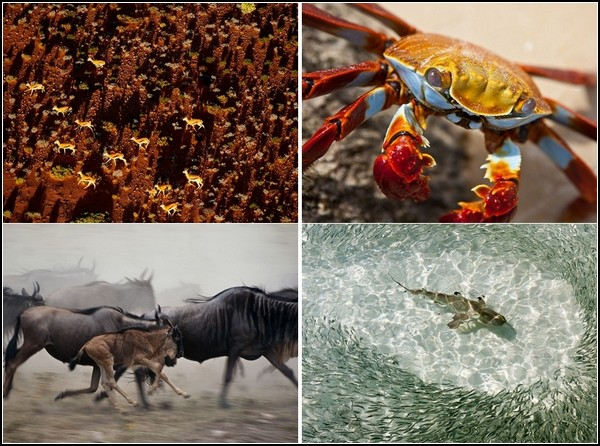 Лучшие фотографии за 04 - 10 июля от National Geographic