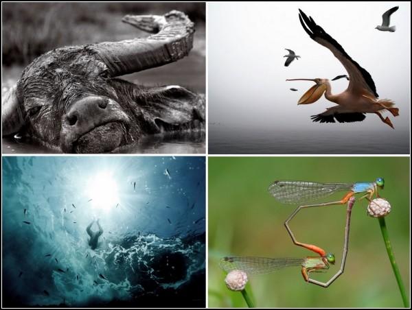 TOP-фото 07-13 февраля от National Geographic