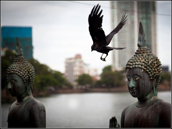 Buddhas and Bird, Sri Lanka