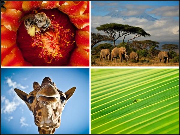 Лучшие фотографии за 11-17 июля от National Geographic
