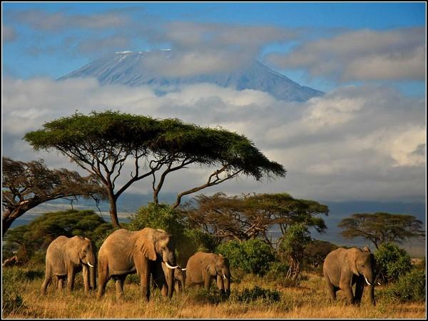 Elephants, Kenya