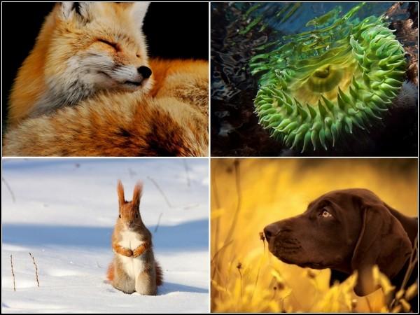 Лучшие фотографии за 14-20 февраля от National Geographic