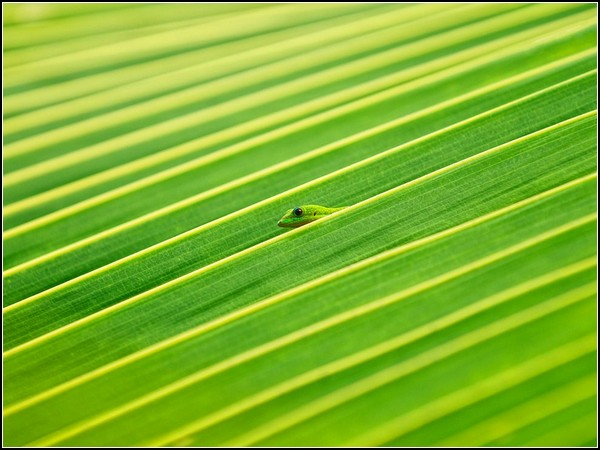 Gecko and Palm Frond