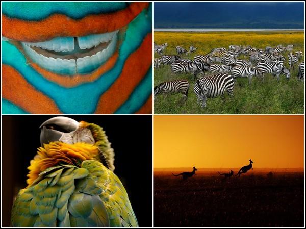 Лучшие фотографии за 18-24 июля от National Geographic