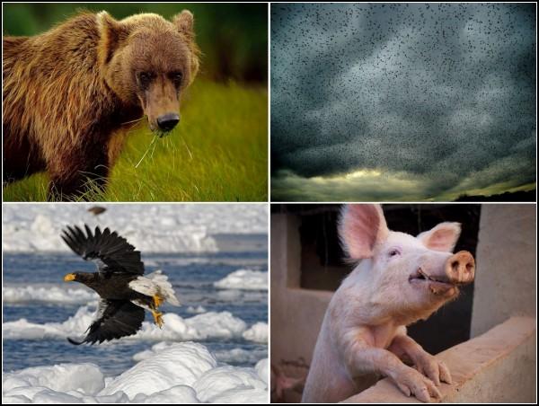 Лучшие фотоработы за 21-27 февраля от National Geographic