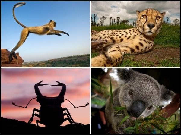 Лучшие фотографии за 25-31 июля от National Geographic
