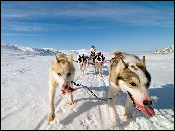 Dog Sled, Norway