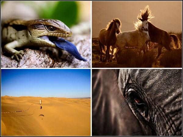 Лучшие фотографии от National Geographic   за 27 июня - 03 июля
