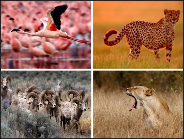 ТOP-фото от National Geographic за 22-28 ноября