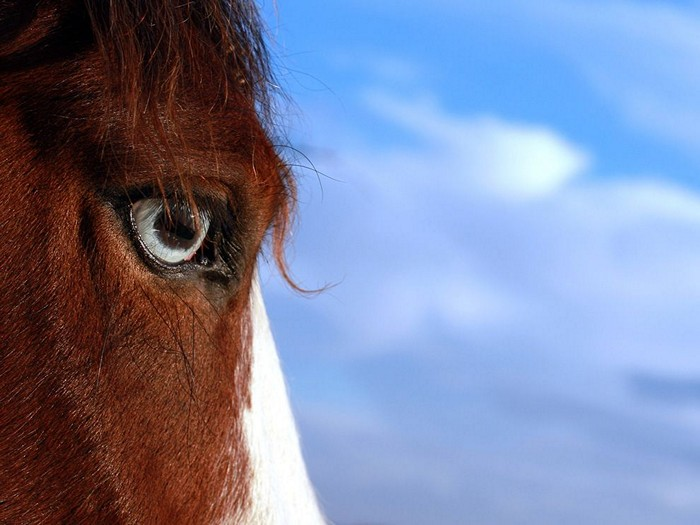 Horse, California