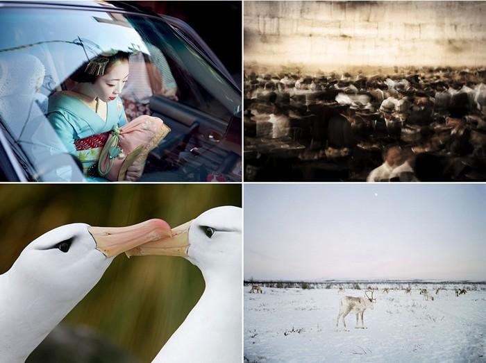 Лучшие фотографии за 28 ноября-04 декабря от National Geographic