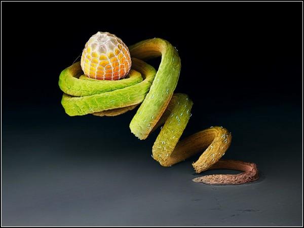 Лучшие фотографии от National Geographic (18-24 октября)500