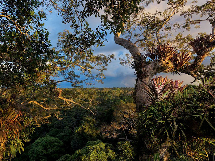 Yasuni National Park, Ecuador