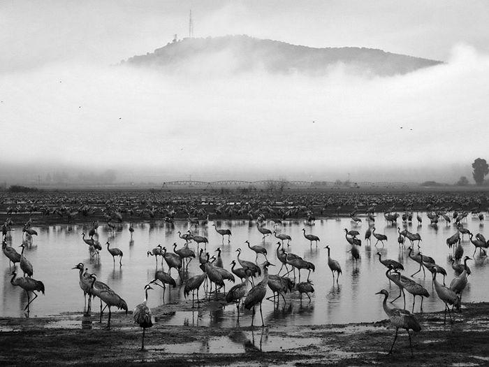 Birds, Israel