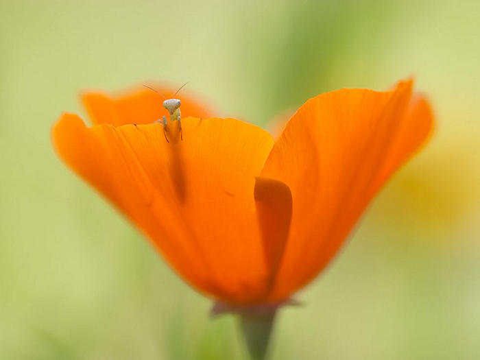 Mantis and Flower