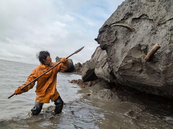 Mammoth Tusk Hunter, Siberia