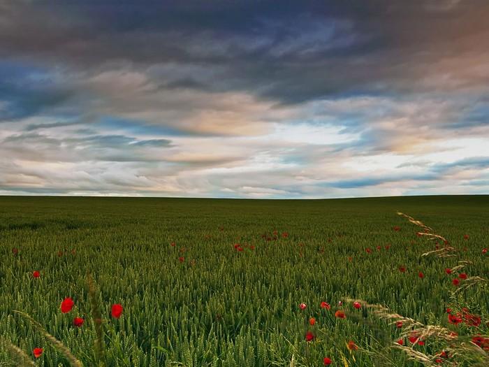 Field, Scotland
