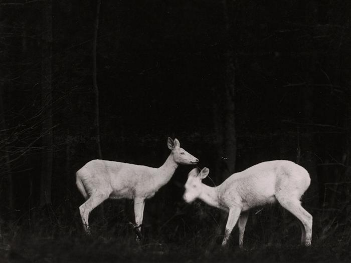 Deer, Michigan