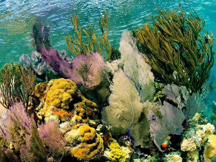 Lighthouse Reef, Belize