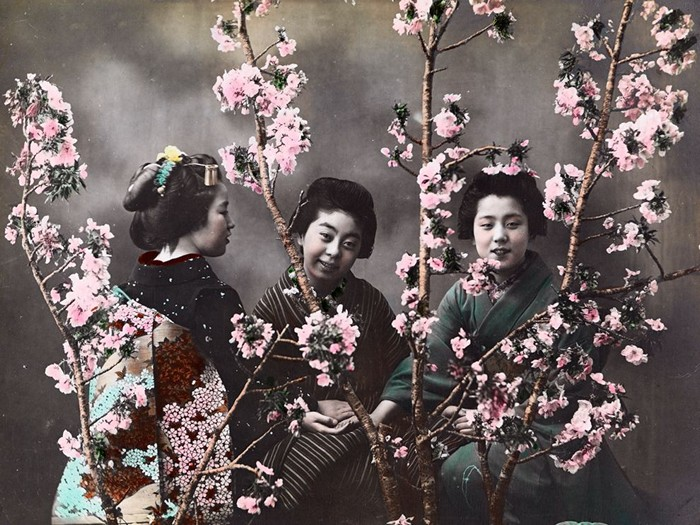 Women With Cherry Blossoms, Japan