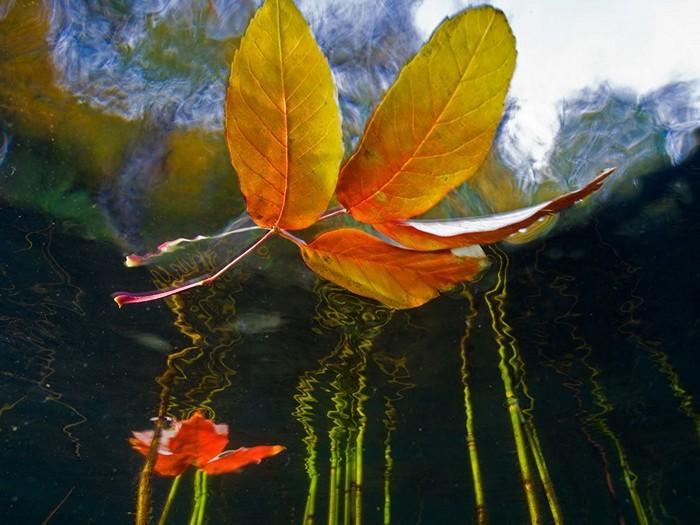 Leaves, Cascade Lake