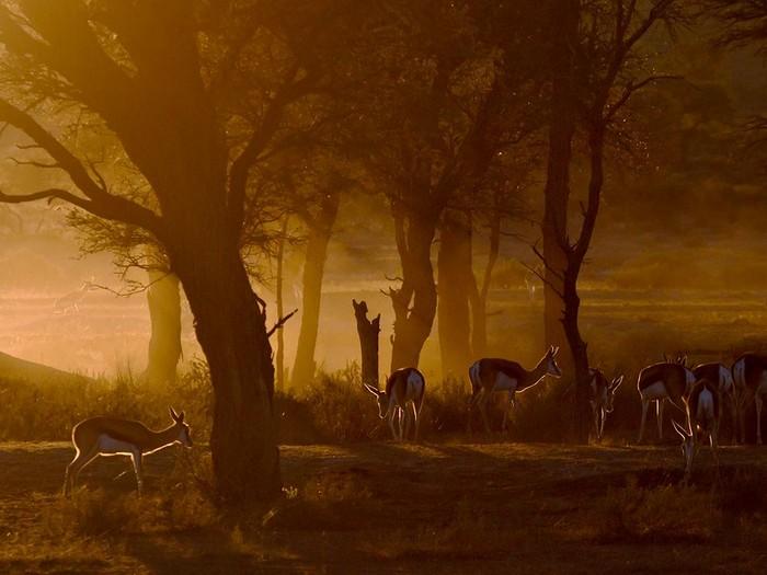 Springboks, South Africa